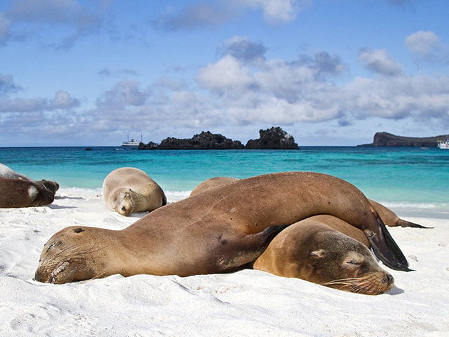 Ecuador Galapagos 24 days