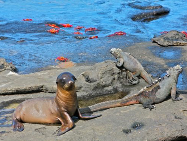 Exploring Ecuador Galapagos 26 days